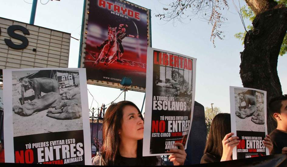 Contra el maltrato animal. Integrantes de 'Derecho sin fronteras', se manifestaron contra el maltrato de animales a las afueras de un circo ubicado en calzada de Tlalpan a la altura del metro Villa de Cortes.