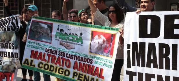 Defensores derechos animales