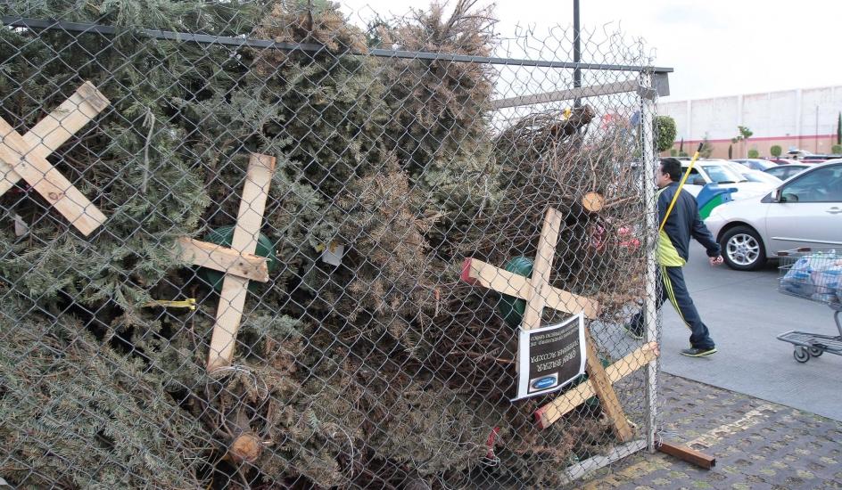México ha regresado más de 13 mil árboles de Navidad a EUA con plagas