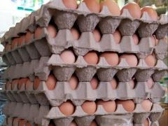 Precio del huevo