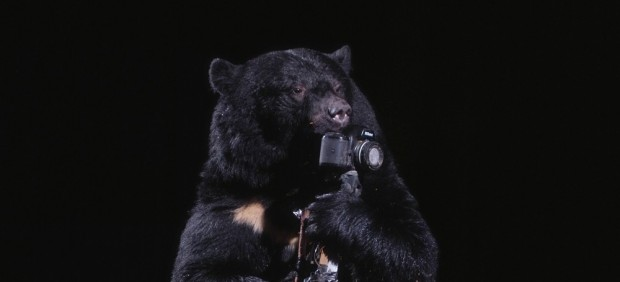 A Black Bear Plays with a Camera, 2006