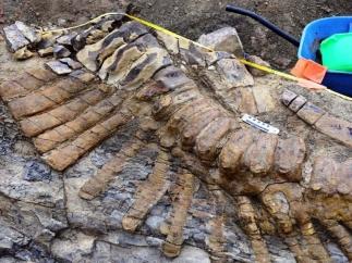 Vértebras de dinosaurio