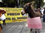 Protesta de los campesinos