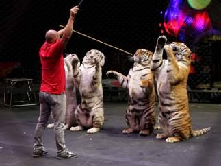 Amor en el circo