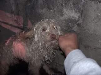 Bitty, perro rescatado