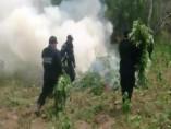 Quema de marihuana en Nayarit