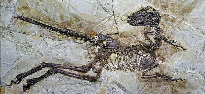 Descubren en China un dinosaurio con plumas