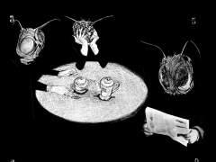 'La metamorfosis': cien años después 'desafortunadamente' actual