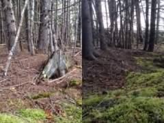 Un bosque en Nueva Escocia que 'respira' como si tuviera pulmones
